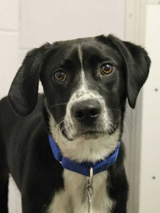 Meet Max! For more information, please call, visit, or email the shelter. Buddy Dog Humane Society, Inc. Sudbury, MA (978) 443-6990 or info@buddydoghs.com