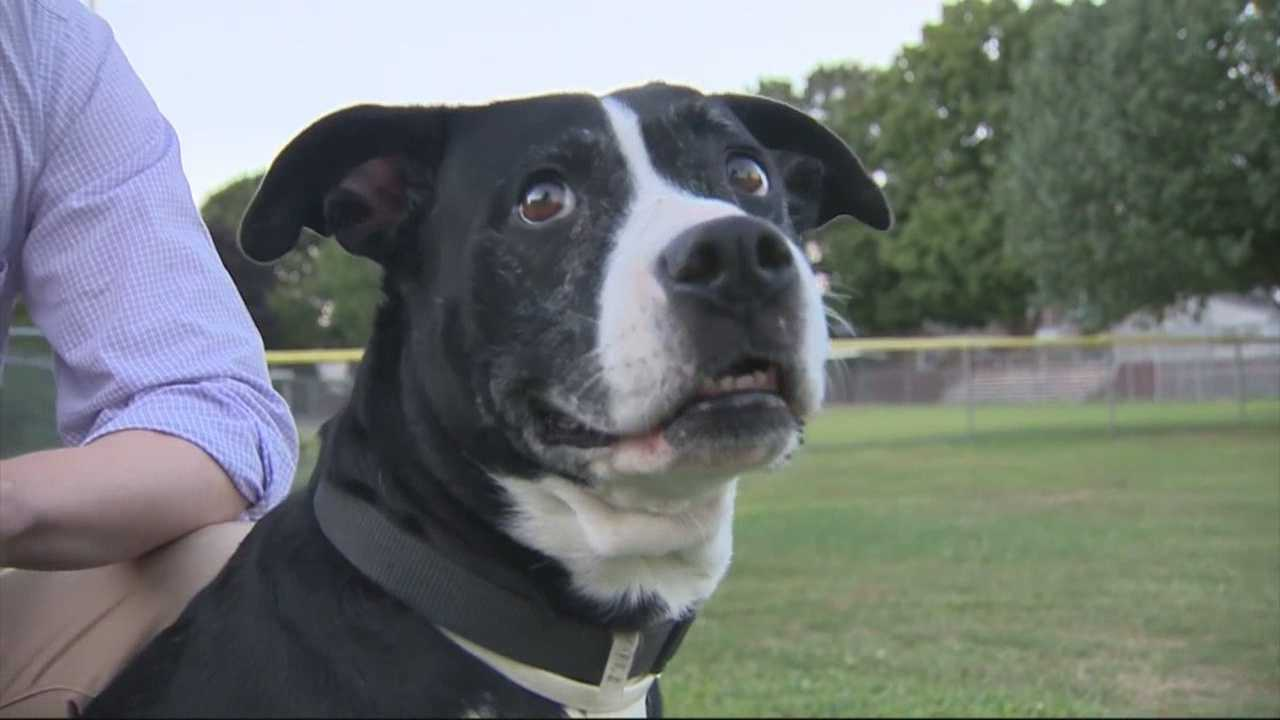 Dog owners warned of deadly parvovirus in Lowell