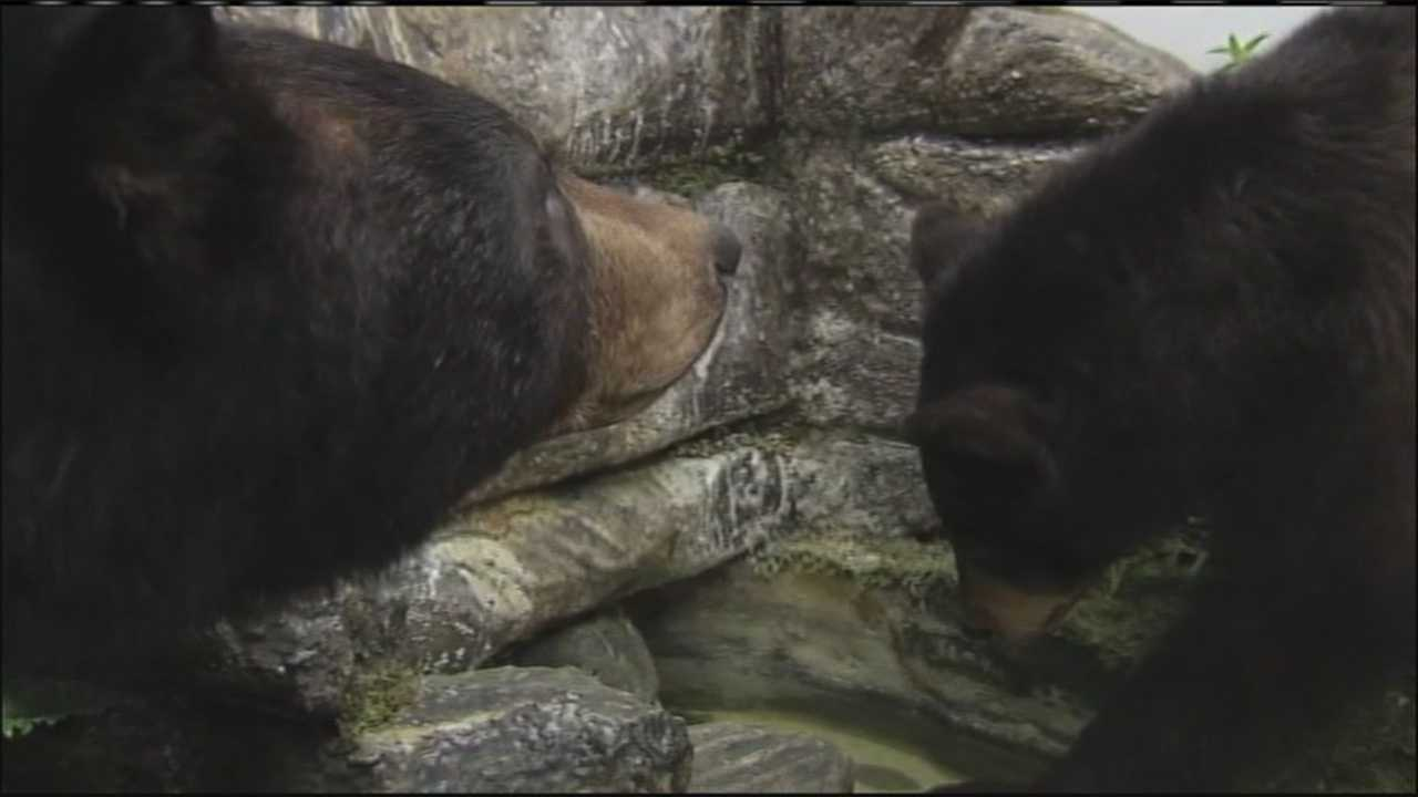 img-Bear Hunting Season begins