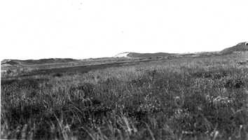 "Cape Cod National Seashore, Massachusetts. Old wooded dune or ""island"" in the beach on the ocean side of Pilgrim Heights, viewed from the marsh above the dike, looking north 80 degrees east. June 5, 1916."