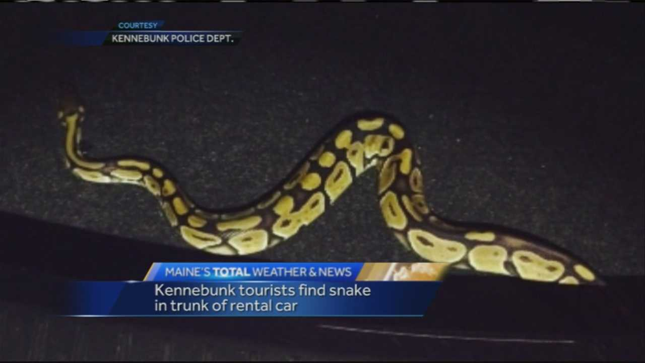 Two out-of-state visitors to Kennebunk brought along an unexpected guest: an exotic snake.