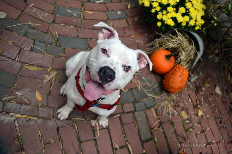 Snow - 9 month old Terrier mix puppy. Loves to go for car rides & play soccer CLICK HERE FOR MORE