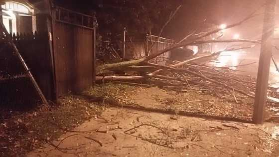 A tree crushes a fence in Mattapan.