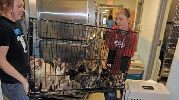 Ari Bartholomew, left, and Terry Perrier brings a cage of cats rescued from a home in Schaghticoke in for examination at the Mohawk Hudson Humane Society on Tuesday Oct. 28, 2014 in Menands, N.Y.