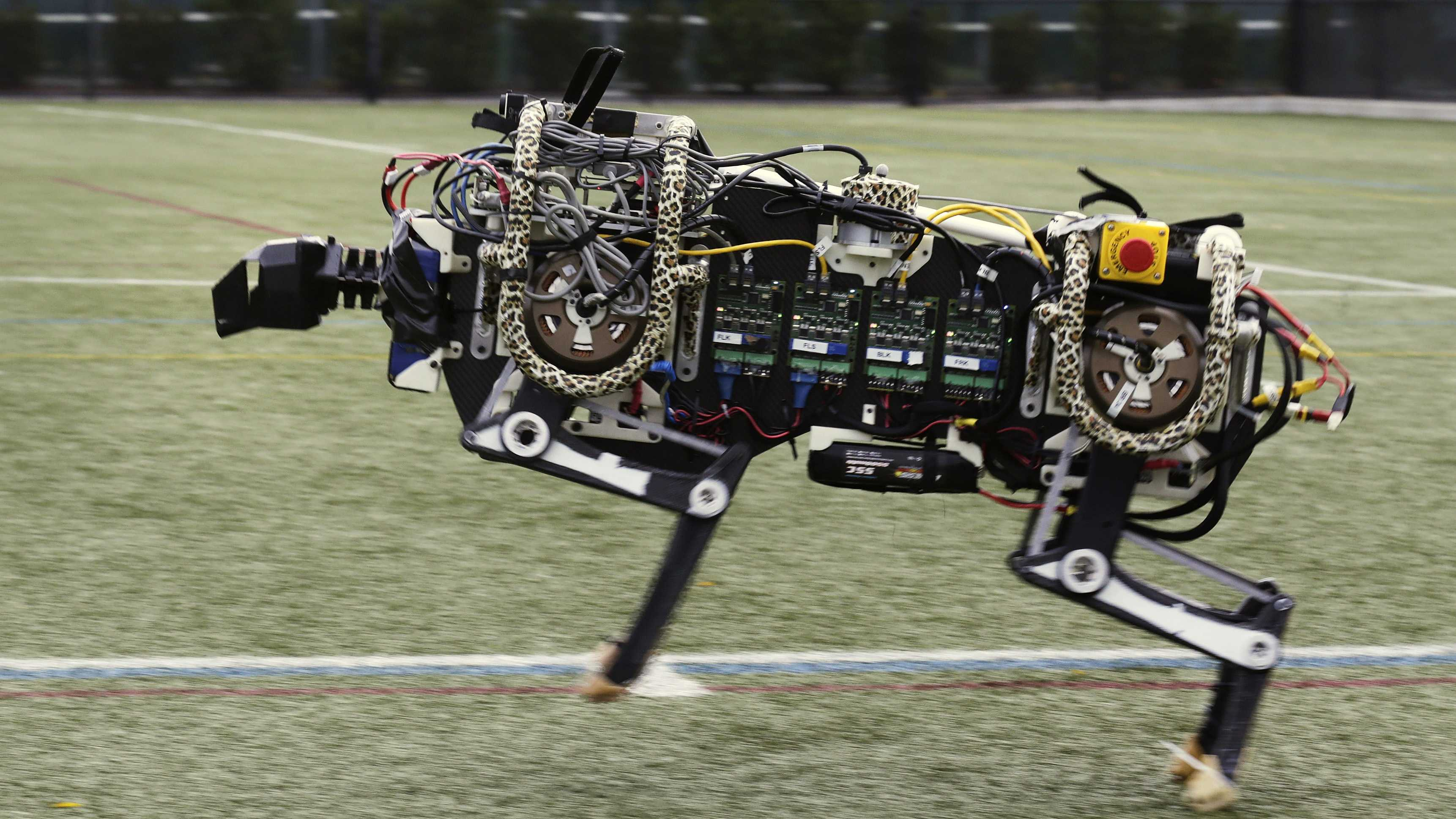In this Oct. 24, 2014 photo, a robotic cheetah runs on an athletic field at the Massachusetts Institute of Technology in Cambridge, Mass. MIT scientists said the robot, modeled after the fastest land animal, may have real-world applications, including for prosthetic legs.