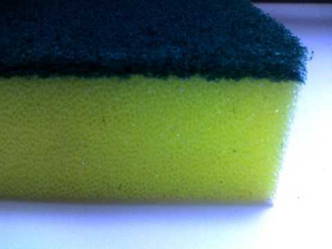 Researchers found 10 percent of kitchen sponges and dishcloths contain salmonella.Dishcloths and sponges harbor the largest amount of E. coli and other fecal bacteria in the average home, mostly because they aren't replaced often enough.