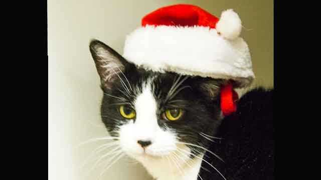 Check out some of these adorable furry pals looking for new homes for the holidays at the Animal Rescue League of Boston!