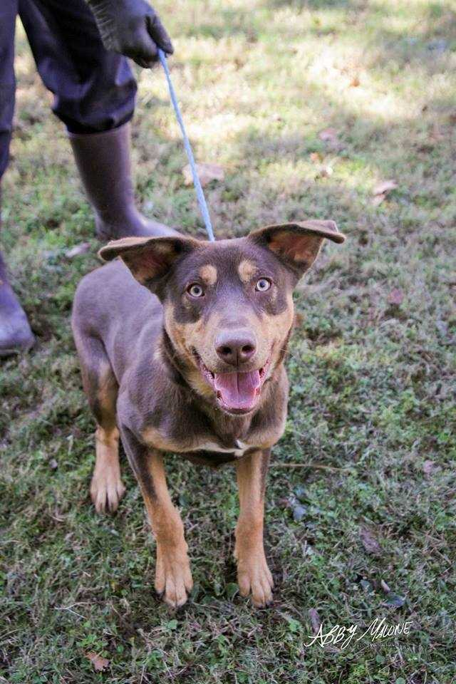 Click here to learn more about Ruff Tales and the pups available for adoption!