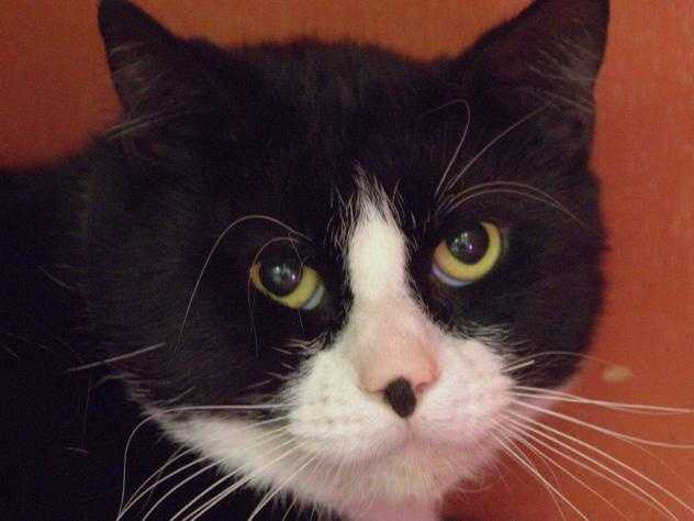 Hi, I'm Gator! I am a handsome boy with a cute black spot on my nose. I am still getting used to my surroundings here, but please say hello! Once I get to know you a bit, my true personality will shine. I really can't wait to find a new loving home. Maybe yours? MORE