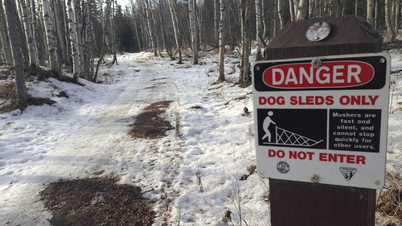 In this photo taken Thursday, March 5, 2015, are bare patches of grass and mud on sled dog trails in Anchorage, Alaska. Warm weather and barren trails south of the Alaska Range prompted race officials to move the official start of the race from the greater Anchorage area to Fairbanks, Alaska.