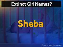 Sheba is the short form of the Biblical Bathsheba, disappearing from view with only five baby girls named Sheba in the US in 2013.