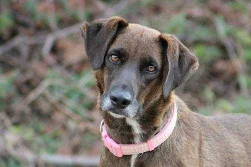 Zappa is a 6 year old Labrador mix. She's a low maintenance girl who gets along with everyone. Including dogs, cats and kids! She's looking for a relaxed easy living kind of lifestyle. MORE