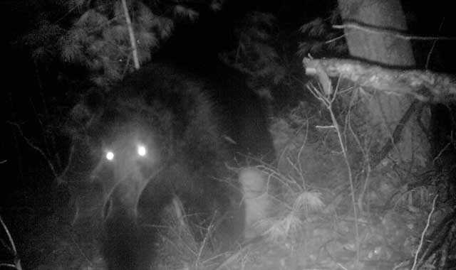 Mark Thomas set up a motion-activated camera in his backyard and a bear was caught on camera.