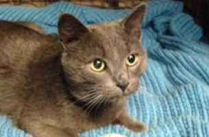 Check out more cats looking for new homes at the Cat Canton Rescue!