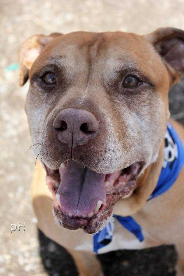 Bobby has spent most of his eight years living outside waiting for someone to love him. Click here.