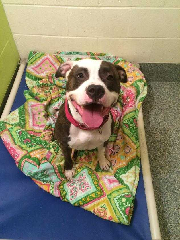 The American meaning of the name Cherry is darling, which describes this girl perfectly. She is four years old, gorgeous to look at and super sweet. Click here.