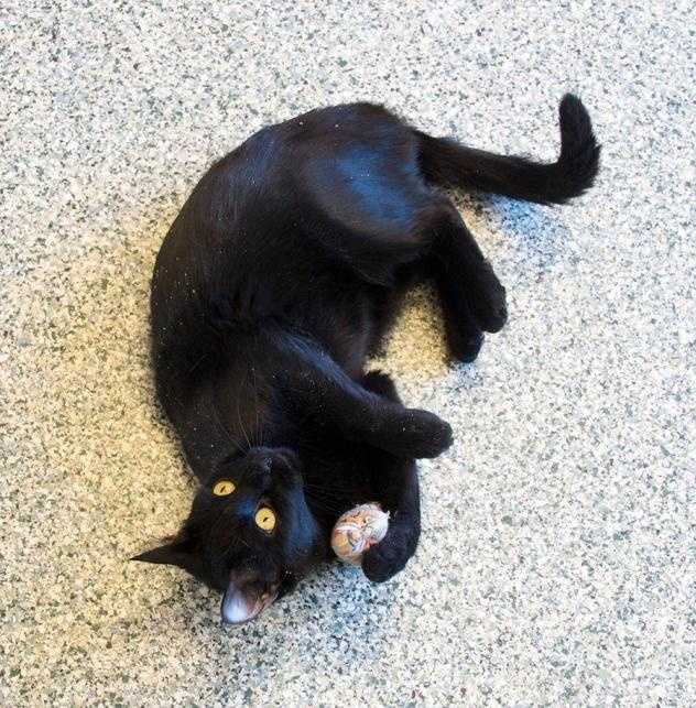 My name is Bippy! I am a super loving girl who is definitely a people person. Click here.