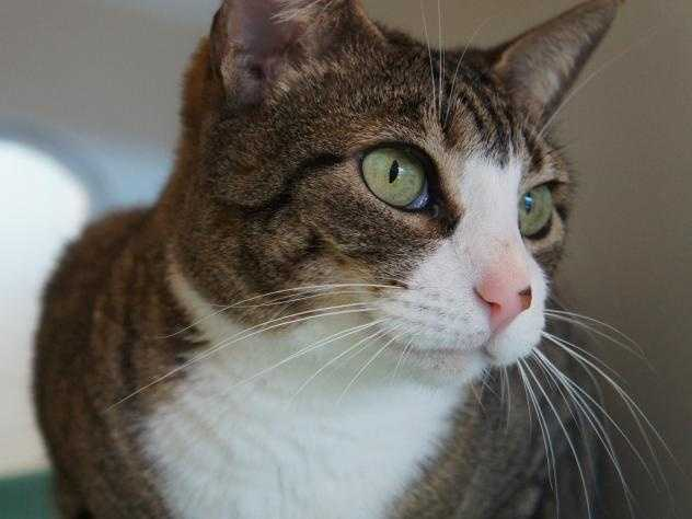 Hi, my name's Beba! I'm a sweet, gentle lady. I'm quite affectionate, and love to spend time with you. Click here.