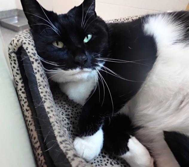 Would you like a super snuggly kitty? That's me, Bootsie! I am just 9 years young, and I have been waiting for my new family since the New Year. Click here.