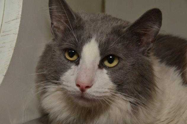 Catherine is a sweet and friendly 3 year old cat. She has such beautiful eyes you would swear she knew just what you were saying to her. Click here.
