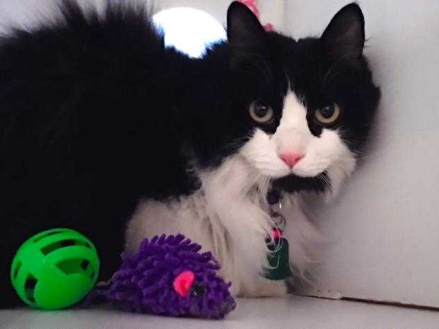 Pretty Chloe is 10 years old and ready to find her family. She has extraordinary fur that loves to be brushed, it makes it so soft and shiny. Click here.