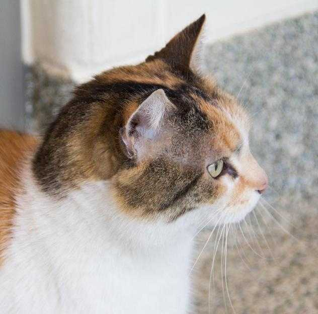 Hi, there, I'm Flora. I'm a sweet lady. I came here because I was a stray, found by a kind stranger who brought me here to find a new home. Click here.