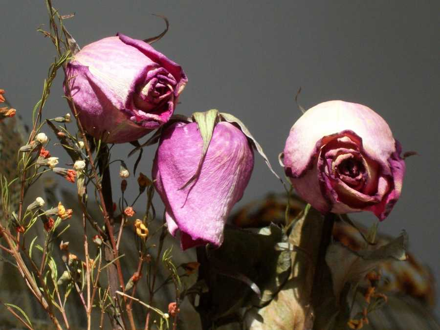 Flowers: If the flower appears beautiful it portrays great love, if the flower is withered and decaying, it suggests sadness and regret over past actions.