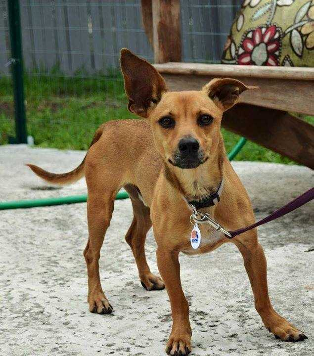 Terry: He is a 1 year old Dachshund mix and weighs 15 lbs. He loves treats and will do tricks so you give him some! I like to play, but I also like to snuggle. Contact Ruff Start for more!