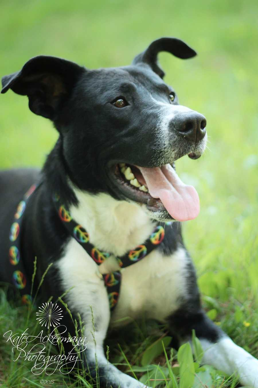Thomas is a 1 year old border collie mix. He's a sweet boy who is learning to love life. MORE