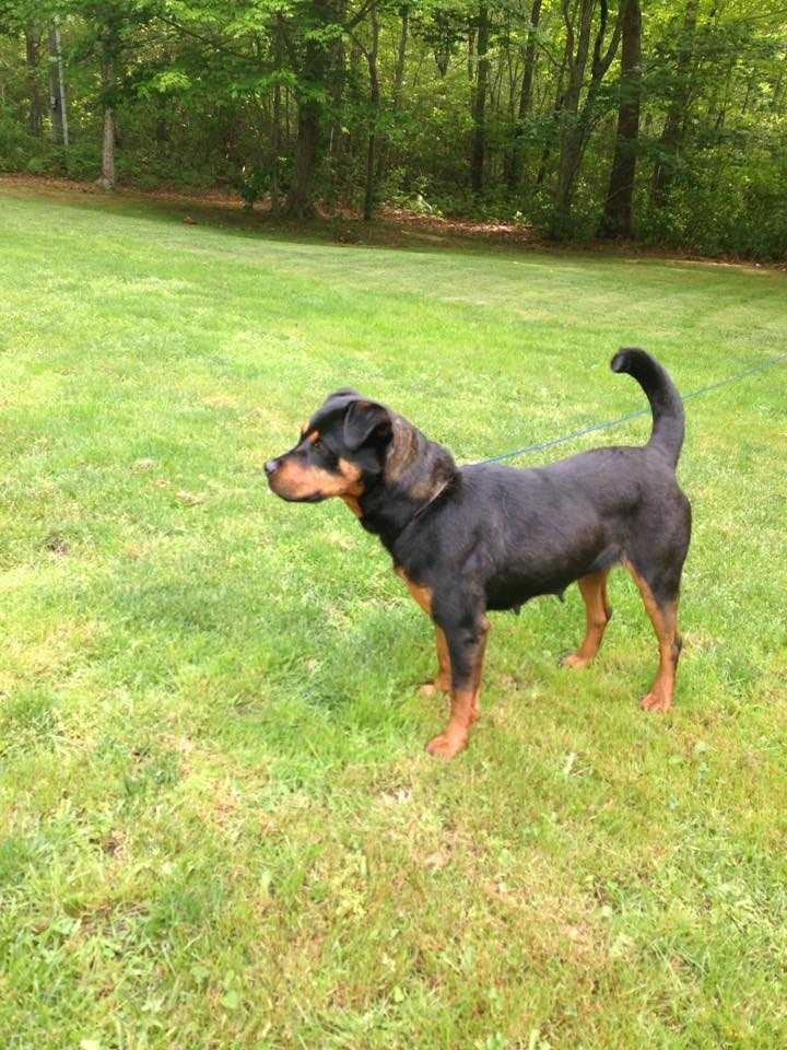 Adora is a 4 year old rottweiler mix. She's great with dogs, cats and kids. MORE