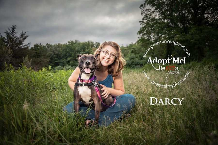 Darcy is a 4 year old pit bull terrier mix. She's a playful girl who is great with kids. MORE