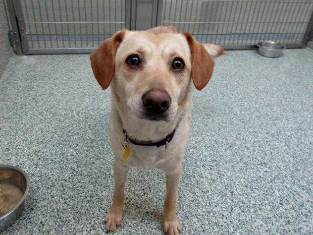 Hi I'm Charlotte! I was found as a stray dog with my brother, George. We love each other so much, we are looking for a home together. MORE