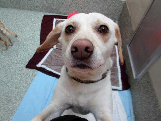 Hi I'm George! I was found as a stray dog with my sister Charlotte. We love each other so much, we are looking for a home together. MORE