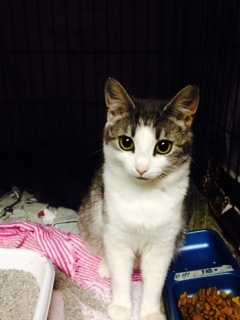 My name is Mary Beth. I am almost a year old and am currently nursing my 3 darling kittens. I am shy but very willing to become friends with a gentle and caring person. More