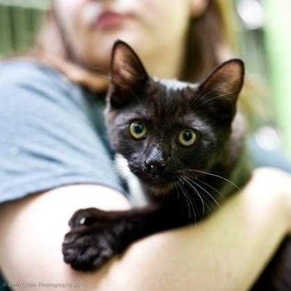 Zumba is here and he is ready to be the life of the party! He absolutely loves to play and is super active. He has a gorgeous black coat with some brown undertones and he is double-pawed. More