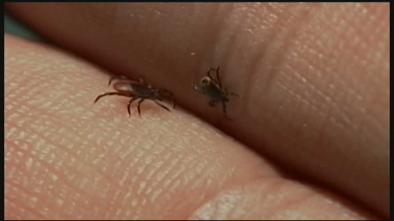 New study shows lyme disease cases increasing in New Hampshire.