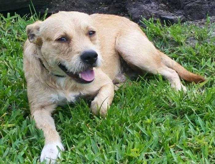 Tuffy: I am a 1 year old, 30 lb Terrier mix. I am good with dogs of all sizes and cats too! I am at little shy at first, but I warm up quickly! More