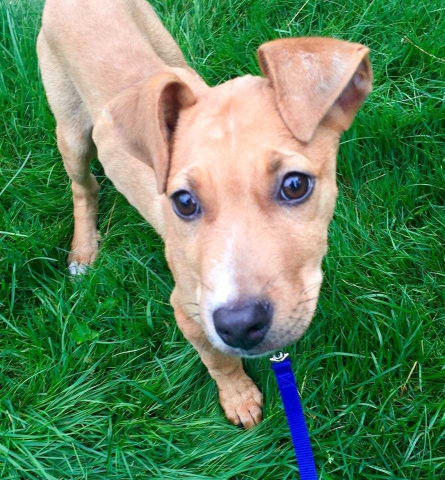 Jacey: I am a 3 month old catahoula mix. I am a typical fun and loving puppy looking for a forever home to grow up in and learn new things! More