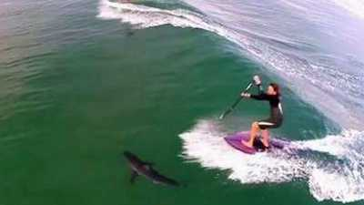 A drone operator captured this video in 2014 of a shark swimming near paddleboarders at Manhattan Beach in California.