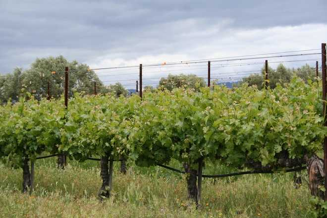 5.) Vineyard -- Everywhere else, it's where they grow grapes.