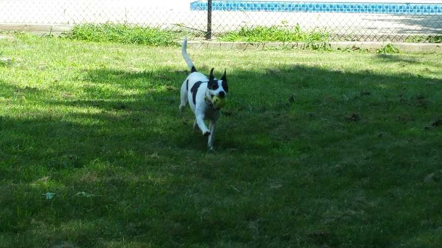 Buddy is a 5 year old Jack Russell mix. He loves to show off his tricks and take long hikes. MORE