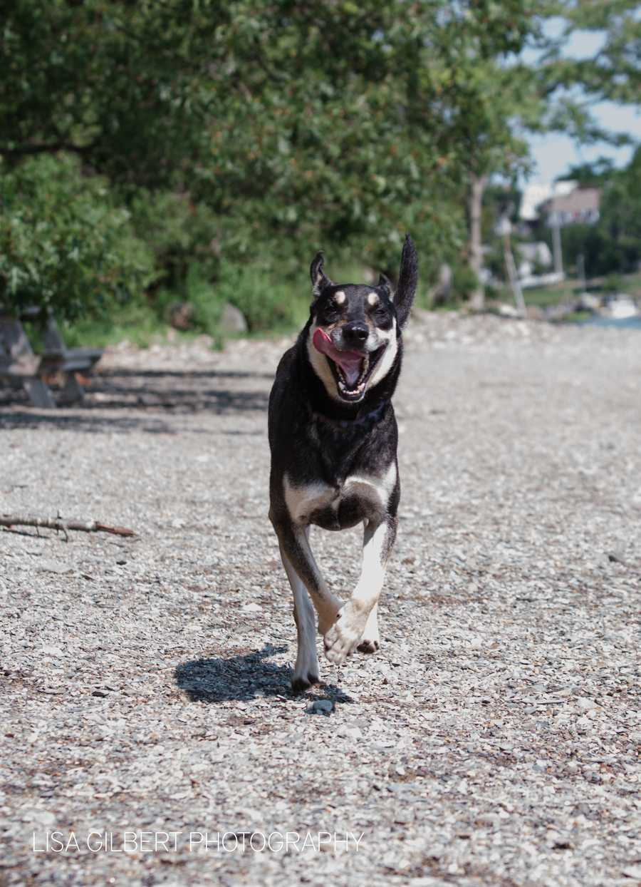 Hayden is a 6 year old lab-rottweiler mix. He's the happiest guy on earth who loves to play with his canine siblings. MORE
