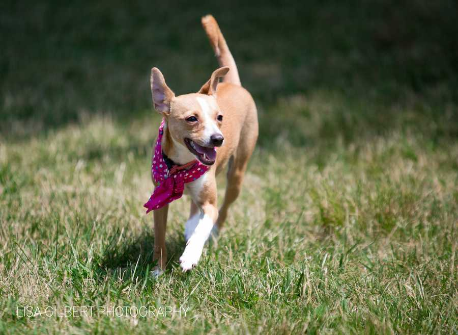 Olivia is a 10 month old terrier mix. She loves to prance around the yard and follow her canine siblings. MORE