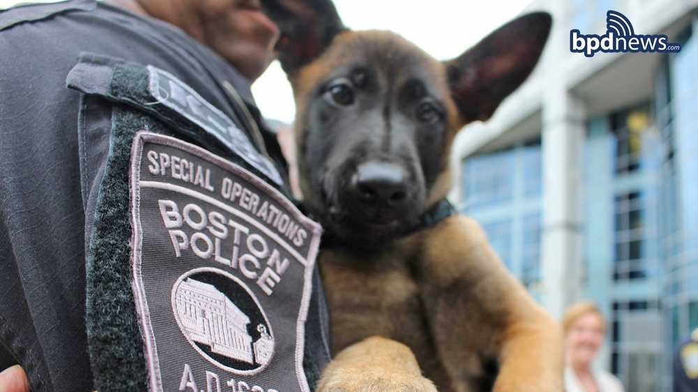 The Boston Police Department has a new addition to its K-9 division and wants you to help suggest a name.