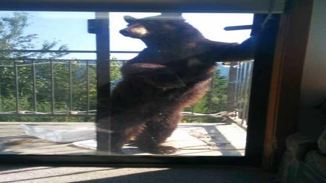 Bear peering into condo through the sliding glass door.