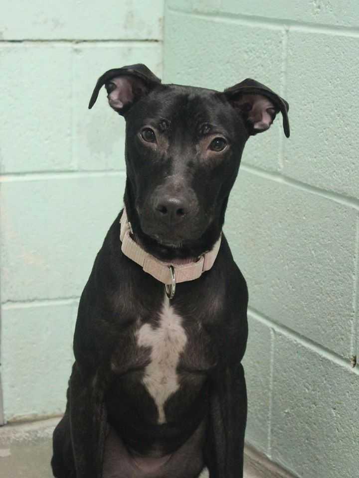 Buddy Dog Humane Society Inc