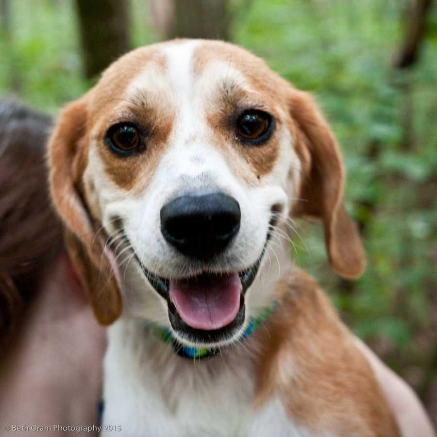 Rothko is a crazy little man. This beagle mix is new to us and we are still getting to now him, but he seems like a very sweet boy. He keeps his crate clean. He also does well with all the dogs he has met. Please give us a call to learn more! MORE