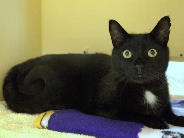 Hi! My name is Weaver! I came to the MSPCA because I was found in Allston by a good Samaritan that brought me here so I can find a nice, warm home. I am a fun loving guy with a lot of playful energy left in me! The shelter is a lot of new sounds and smells that tend to give me some nervous energy so please be patient and go slow with me. I am a very curious little guy and will definitely liven up your home. MORE