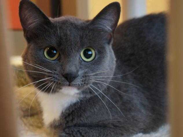 Hello! I'm Duchess. My previous owner moved and couldn't bring me along. I am still getting used to my new surroundings here ... Once I get comfortable, my affectionate personality will shine through. I'm glad to be here with my brother, Spankie. I am really hoping that we can go to a new home together! MORE