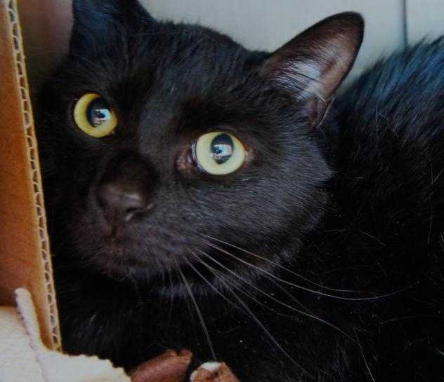 Hi there! I'm Spankie. My previous owner moved and couldn't bring me along. I am a sweet and friendly chap who loves a nice head scratch. I came here with my sister Dutchess, and we would love to go to a new home together! We're best buds. Twice the sweetness and fun. MORE